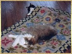 cats in carpet
